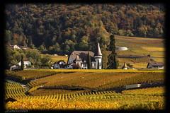 Domaine de la commune d'Yvorne - canton de Vaud - Suisse (jamesreed68) Tags: suisse schweiz switzerland paysage nature vignoble vaud yvorne