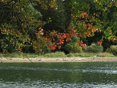 IMG_3334 (germancute) Tags: nature outdoor landscape landschaft autumn herbst laub leaves thuringia thüringen tree teich see wald water wasser ngc