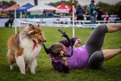 Doggy Cross (Phil Roeder) Tags: iowacity iowa jinglecross cyclocross dog dograce doggycross rollover canon6d canonef70200mmf4lusm