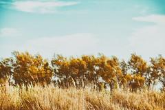 Stripes (marcus.greco) Tags: stripes nature vintage trees