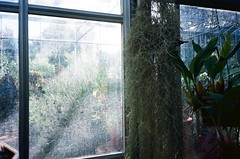 Glasshouse (knautia) Tags: glasshouse bristoluniversitybotanicgarden bristol england uk september 2018 film ishootfilm olympus xa2 olympusxa2 kodak ektar 100iso nxa2roll78 botanicgarden