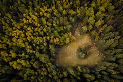 Flagstaff-0648 (Michael-Wilson) Tags: flagstaff arizona fall autumn michaelwilson mountain mountains forest coconinonationalforest lockett meadow sanfranciscopeaks mt humphreys snowbowl heart heartmeadow arial drone dji djimavic aspen aspens trees pine pines