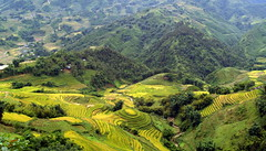 Sapa rice fields (bushman58929) Tags: vietnam bushman58929 olympus panorama travel tourist sapa