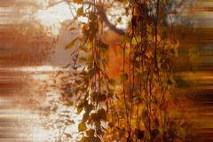 Autumn ... (Julie Greg) Tags: autumn autumn2018 nature nautre colours texture river lake motepark kent england canon trees leaf leafs