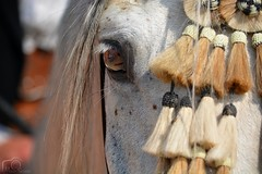 Eye (Marion_Sc) Tags: acheval06 nikon nikkor 55300mm photographie photography animalière animalier animalia animal horse cheval oeil eye équidé equus mammifère mammal equidea portrait extérieur nice hippique 2018 french riviera