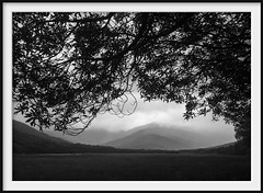 a wider canopy (Andrew C Wallace) Tags: blackandwhite bw wilsonspromontory victoria australia microfourthirds m43 olympusomdem5