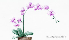 How to Draw an Orchid With Pen & Ink (fountain pens) - Narrated (fineart-tips) Tags: art drawing finearttips orchid flowers fountainpen tutorial artistleonardo leonardopereznieto patreon tutto3