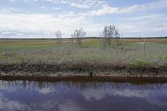 Tomago salt marsh 2 (Marine Explorer) Tags: nature coastal marine australia marineexplorer