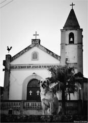 Guardião Foto Marcus Cabaleiro Site: https://marcuscabaleirophoto.wixsite.com/photos Blog: http://marcuscabaleiro.blogspot.com.br/  #muscabaleiro #paranapiacaba #sp #brasil #igreja #cão #dog #cachorto #guardião #mono #fotografia #arte #brazil #monocolor # (marcuscabaleiro4) Tags: paranapiacaba vigilante brazil igreja brasil cão contraste cachorto arte mono nikon olhar sentinela white blackandwhite bw photographer sp guardião detalhes muscabaleiro monocolor black fotografia pb igrejabomjesusdeparanapiacaba monochrome tonsdecinza dog photography