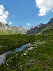 Glattalp (Marit Buelens) Tags: brook suisse schweiz switzerland schwyz bisistal muotathal sahli glattalp ortstock höchturm flower gentian enzian wollegras eriophorum cottongrass cottonsedge wollgras green blue