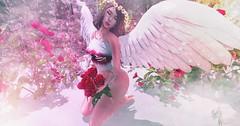 Heavenly Angel (Maria DellaCroix) Tags: sorumin amias lyrium limerence catwa maitreya essenz fameshedx sanarae