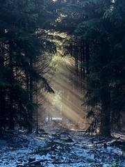 Am Feldberg im Taunus (nordelch61) Tags: deutschland heimat hessen taunus mittelgebirge wald baum bäume ast äste zweig zweige nebel sonne gegenlicht sonnenstrahlen sun sunbeams backlit fog mist morning