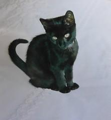 Lovely Murre (Ken-Zan) Tags: cat katt murre rip scanner mitten kenzan ljunghav