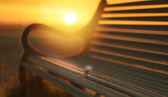 Sunkissed.... #HappyBenchMonday #HBM (KissThePixel) Tags: bench benchmonday happybenchmonday happy leaf autumn autumncolours autumnlight sun sunrise sunlight light simplebeauty simplicity sigma sigmaart 14 f14 nikon nikond750 bokeh landscape macro closeup macromonday sky skyscape september 50mm