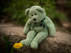 Loving Nature (HTBT) (13skies (broke my wrist)) Tags: sitting dandelion flower weed concrete greenbear gerrie htbt teddybear happyteddybeartuesday outside nature looking plant shallowdof ribbon