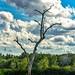 Elm Lake Egret Tree