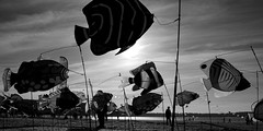 Vent de Grève (Amanda Hinault - Actvités Humaines) Tags: ccbysa photobyamandahinault creativecommons pentax pentaxk1ii pentaxart noiretblanc blackandwhite nb noirblanc blackwhite bw monochrome festival ventdegrève sea mer beach sand plage sable street