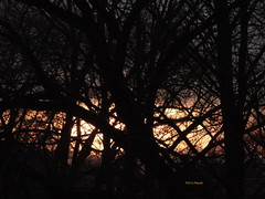 Fiery sunset (ninayak- Busy next few weeks) Tags: fire behind woods fiery sunset winter 2013 pockets nature street balcony branches twigs