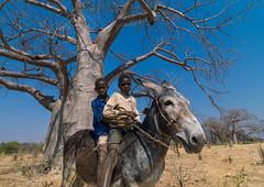 Mudimba tribe boys riding a donkey in front of a baobab, Cunene Province, Kuroca, Angola (Eric Lafforgue) Tags: africa africantribe angola angolan animal baobab black boysonly childhood children colourimage cultures day developingcountries donkey ethnicgroup horizontal humanbeing indigenousculture kuroca lifestyles mammal mudimba nonurbanscene outdoors photography riding ruralscene tree tribal tribe twopeople anga4486444 cuneneprovince ao