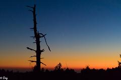 (M)ein Stern der deinen Namen trägt ... / A Star, Which Bears Your Name ... (konstantin oxy) Tags: star stern nacht nachthimmel licht schatten rot landschaft tree twilight sky dream traum