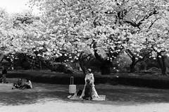 Shinjuku Gyoen, Tokyo (fabiolug) Tags: trees tree nature sakura cherryblossoms spring women woman bag suitcase trolley picnic people streetphotography street tokyo japan 東京 日本 japanese asia leicammonochrom mmonochrom monochrom leicamonochrom leica leicam rangefinder blackandwhite blackwhite bw monochrome biancoenero 35mmsummicronasph 35mmf2summicronasph summicronm35mmf2asph summicron35mmf2asph 35mm summicron leicasummicron leica35mm park