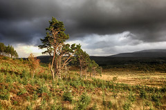 (OutdoorMonkey) Tags: creagananfhithich truimwoods trees wood woodland evening sunshine sunlight overcast clouds pines pinetrees forestry landscape scenery crubenbeg