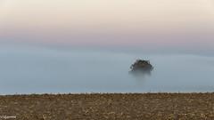 08102018-DSC_0005 (vidjanma) Tags: matin brume arbre minimalisme