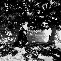 Les arbres sont des stimulateurs de neurones... (woltarise) Tags: streetwise iphone7 france marseille palaislongchamp bâtiments arbres ombres lumières femme
