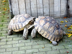 born_061 (OurTravelPics.com) Tags: born tortoises kasteelpark zoo