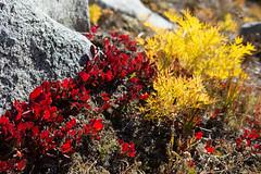 Autumn show (D. Inscho) Tags: idalake blueberry alpinelakeswilderness washington northcascades northwest