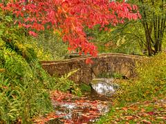 Autumnal Bridge (niloc's pic's) Tags: bridge water reflections trees leaves plants wakehurstplace nationaltrust kewgardens sussex panasonic lumix dmcgh4r