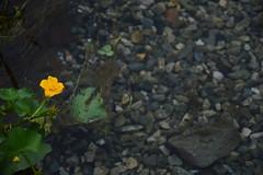 Sondrio - Italy (giorgioparker) Tags: italia italy sondrio water flowers flower fiore colori colors autumn autunno