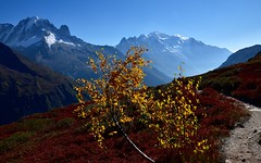 Mont Blanc en automne - Autumn Mont Blanc (CHAM BT) Tags: soleil automne feuille jaune rouge montblanc sentier rando chemin bouleau myrtiller balade sun autumn leaf yellow red path blueberry walk hike alps alpes hautesavoie fantasticnature