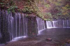 白糸の滝 (t_mimizuk) Tags: film contax tvs nature autumn waterfalls karuizawa nagano japan 軽井沢