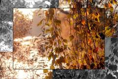 Autumn nature ... 🍁 (Julie Greg) Tags: autumn autumn2018 nature nautre colours tree trees leaf leaves park details