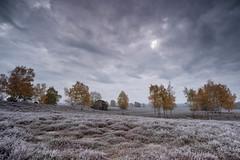 Cold Morning (michel1276) Tags: frost autumn herbst november westruperheide halternamsee haltern landschaft landscape heide heath trees bäume wolken clouds sonya7iii batis1828 batis2818 frozen gndsoft06 leefilter himmel sky baum