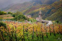 Vigneti (alex.83g) Tags: liguria vigna natura paesaggio landscape chiesa ormeasco