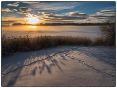 Nordbytjernet 9. desember 2018 #4 (Krogen) Tags: norge norway norwegen akershus romerike ullensaker nordbytjernet landscape landskap vinter winter krogen panasoniclumixgx7
