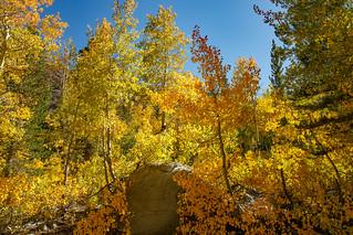 North Lake Rd Fall 2018  8741