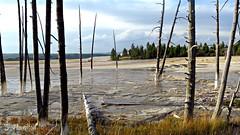 Travertine Terrace - Yellowstone (Suzanham) Tags: travertineterrace terrace hotsprings montana trees calciumcarbonate nature yellowstonenationalpark