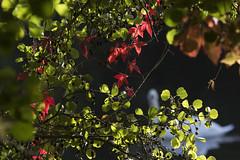 Cliveden Reach (Peter Meade) Tags: petermeade pjmeade clivedenreach thames river riverlife riverthames cliveden berkshire nature canoneos7dmarkii canonef100400mmf4556lisusm