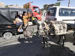 The tiny donkey pulls the weight of the world. :( (ashabot) Tags: donkey animals egypt cairo streetscenes streetlife streetscene streetphotography theworld