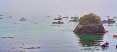 THE LONGEST JOURNEY IS THE JOURNEY INWARD  ~~Dag Hammarskjold (Irene2727) Tags: ocean water nature fog trinidadcalifornia coast pacificcoast pacificocean