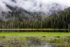 Standstill forever (The eclectic Oneironaut) Tags: 2018 6d canada canon eos selected wallpaper joffre lake british columbia green trees clouds mist