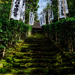 Mossy stone steps of Sugimoto-dera Temple : 杉本寺の石段(鎌倉市二階堂) thumbnail