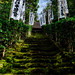 Mossy stone steps of Sugimoto-dera Temple : 杉本寺の石段(鎌倉市二階堂)
