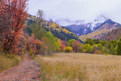 Path to Autumn Colors (aaronrhawkins) Tags: fall autumn color yellow red orange path trail road meadow mountain mountaintop snow aspen grove tree forest southfork provocanyon provo utah wasatch aaronhawkins