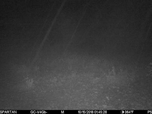 2018-10-15 01:45:28 - Crystal Creek 1
