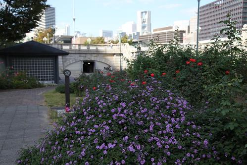 都会のバラ園 Nakanoshima Rose Garden