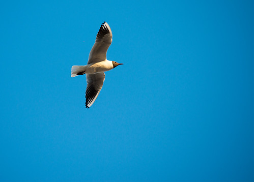 Bird ©  Andrey